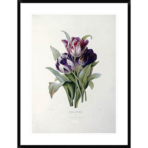 Global Gallery Tulips By Pierre Joseph Redoute, 36 X 27-Inch Wall Art