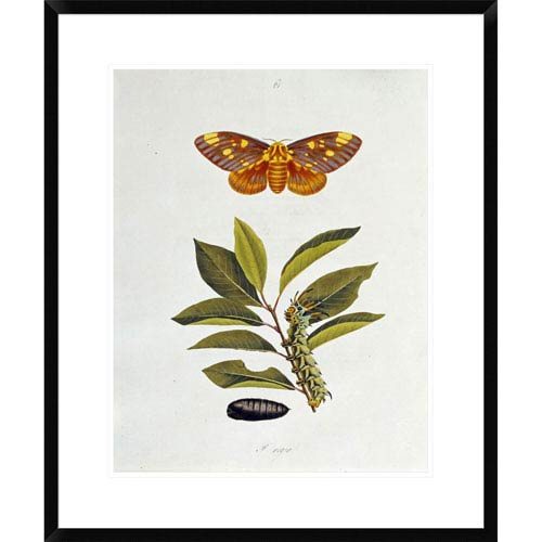 Global Gallery The Natural History Of The Rarer Lepidopterous Insects Of Georgia 1794 By John Abbot, 28 X 23-Inch Wall Art