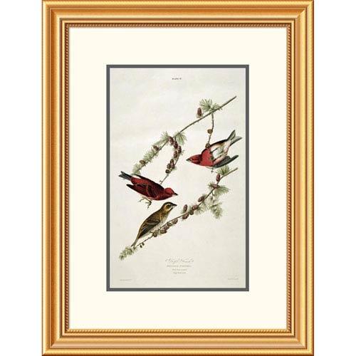 Global Gallery Purple Finch By John James Audubon, 26 X 19-Inch Wall Art