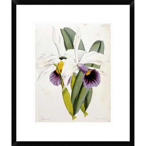 Global Gallery Lily By William Curtis, 22 X 18-Inch Wall Art