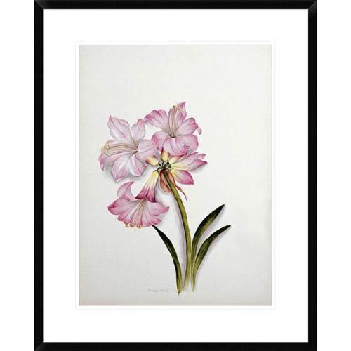 Global Gallery Amaryllis Belladonna By Ethel May Dixie, 28 X 22-Inch Wall Art