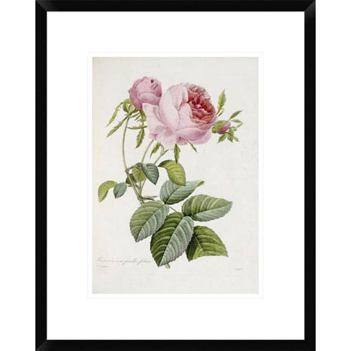 Global Gallery Rose By Pierre Joseph Redoute, 22 X 17-Inch Wall Art
