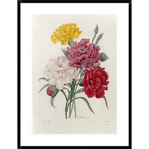 Global Gallery Carnations By Pierre Joseph Redoute, 36 X 27-Inch Wall Art