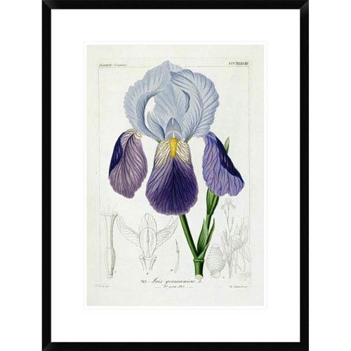 Global Gallery Bearded Iris By H.G.L. Reichenbach, 28 X 21-Inch Wall Art