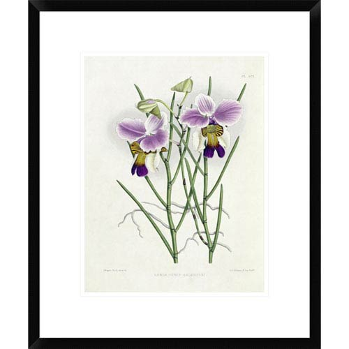 Global Gallery The Orchid Album Plate 475 By Robert Warner, 22 X 18-Inch Wall Art