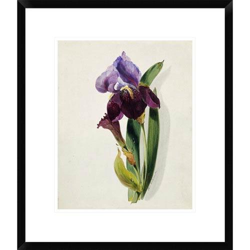 Global Gallery A Flag Iris By Thomas Holland, 22 X 18-Inch Wall Art