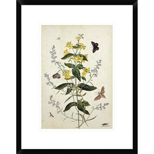 Global Gallery Yellow Loosestrife And Other Wild Flowers By Thomas Robins Jr., 22 X 17-Inch Wall Art