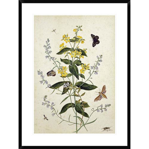 Global Gallery Yellow Loosestrife And Other Wild Flowers By Thomas Robins Jr., 36 X 26-Inch Wall Art