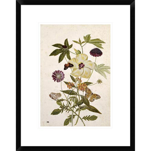 Global Gallery Milkweed, Poppy And Hibiscus By Thomas Robins Jr., 22 X 17-Inch Wall Art