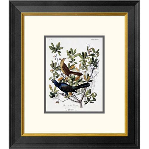 Global Gallery Boat Tailed Grackle Male And Female By John James Audubon, 20 X 17-Inch Wall Art
