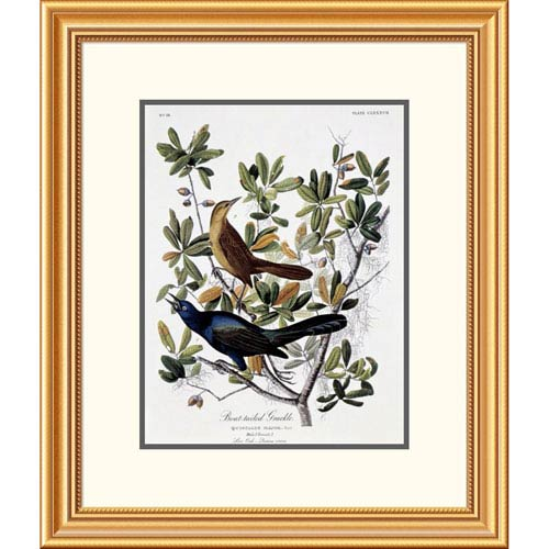 Global Gallery Boat Tailed Grackle Male And Female By John James Audubon, 26 X 22-Inch Wall Art
