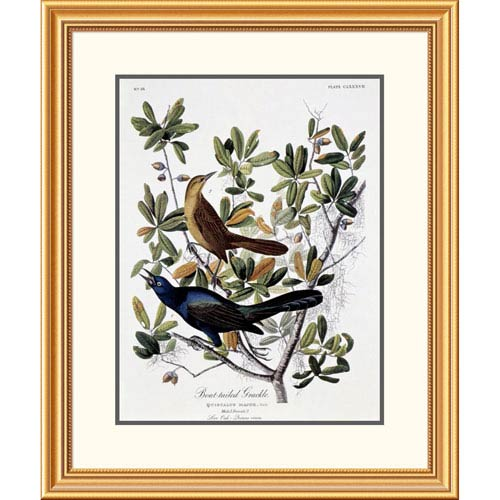 Global Gallery Boat Tailed Grackle Male And Female By John James Audubon, 32 X 26-Inch Wall Art
