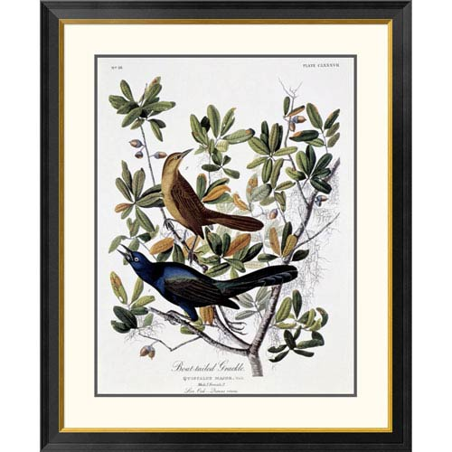 Global Gallery Boat Tailed Grackle Male And Female By John James Audubon, 40 X 32-Inch Wall Art