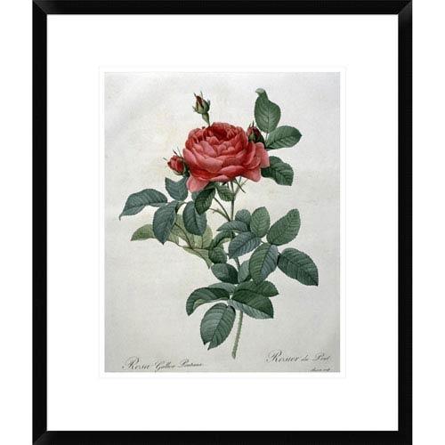 Global Gallery Rosa Gallica By Pierre Joseph Redoute, 22 X 18-Inch Wall Art