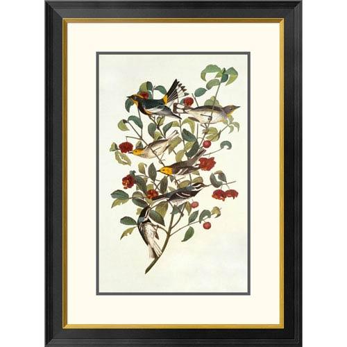 Global Gallery Audubons Warbler By John James Audubon, 32 X 23-Inch Wall Art