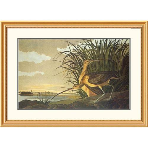 Global Gallery Long Billed Curlew By John James Audubon, 28 X 40-Inch Wall Art