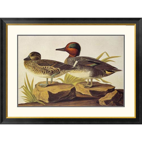 Global Gallery American Green Winged Teal By John James Audubon, 30 X 40-Inch Wall Art
