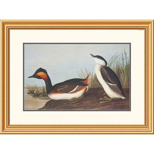 Global Gallery Eared Grebe By John James Audubon, 23 X 32-Inch Wall Art