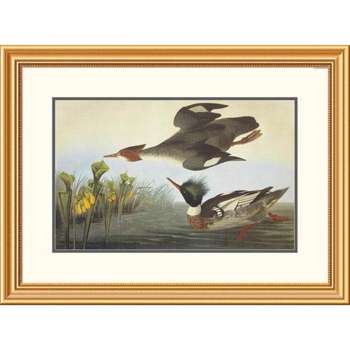 Global Gallery Red Breasted Merganser By John James Audubon, 23 X 32-Inch Wall Art
