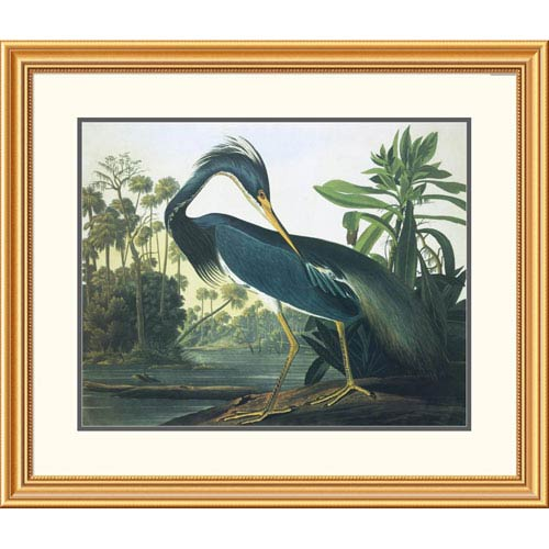 Global Gallery Louisiana Heron By John James Audubon, 30 X 34-Inch Wall Art