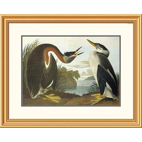 Global Gallery Red Necked Grebe By John James Audubon, 25 X 32-Inch Wall Art