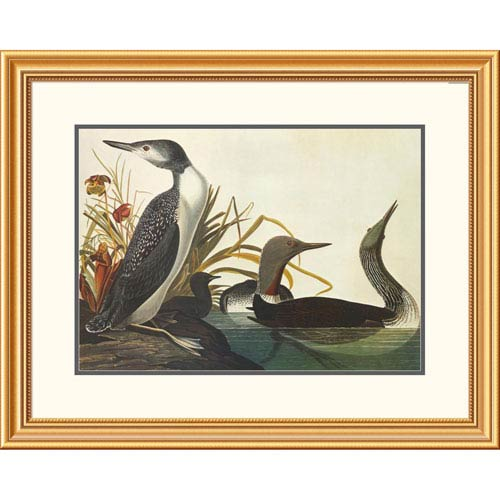 Global Gallery Red Throated Diver By John James Audubon, 25 X 32-Inch Wall Art