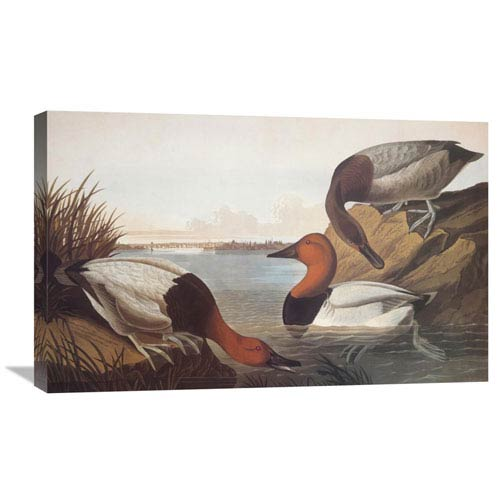Global Gallery Canvas Backed Duck By John James Audubon, 30 X 21-Inch Wall Art