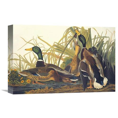Global Gallery Mallard Duck By John James Audubon, 18 X 12-Inch Wall Art
