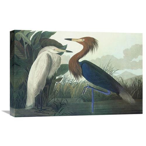 Global Gallery Purple Heron By John James Audubon, 24 X 16-Inch Wall Art