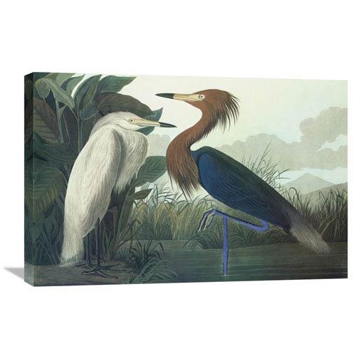 Global Gallery Purple Heron By John James Audubon, 30 X 20-Inch Wall Art