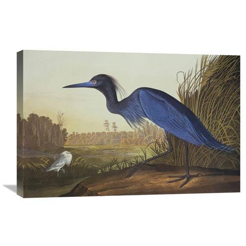 Global Gallery Blue Crane Or Heron By John James Audubon, 30 X 20-Inch Wall Art