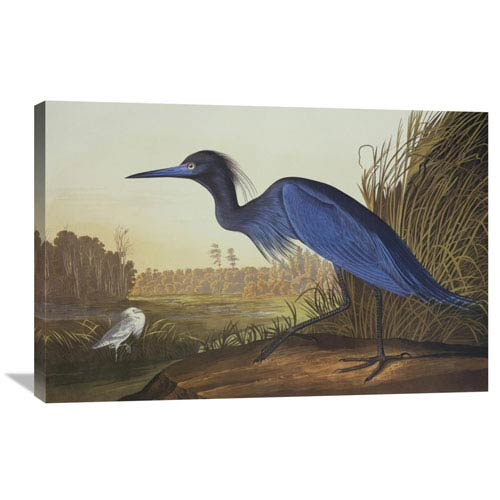 Global Gallery Blue Crane Or Heron By John James Audubon, 36 X 24-Inch Wall Art