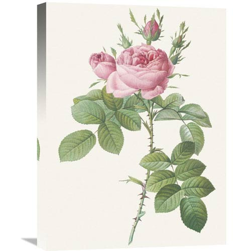 Global Gallery Rosa Bifera Officinalis By Pierre Redoute, 18 X 24-Inch Wall Art