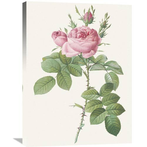 Global Gallery Rosa Bifera Officinalis By Pierre Redoute, 24 X 32-Inch Wall Art
