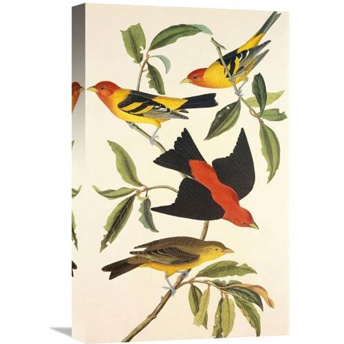 Global Gallery Louisiana Tanager, Scarlet Tanager By John James Audubon, 13 X 22-Inch Wall Art