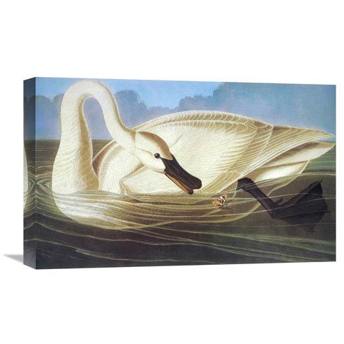 Global Gallery Trumpeter Swan By John James Audubon, 22 X 13-Inch Wall Art