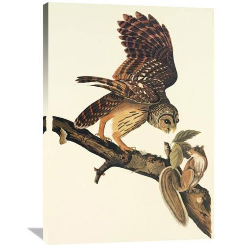 Global Gallery Barred Owl By John James Audubon, 28 X 40-Inch Wall Art