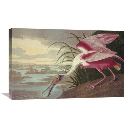 Global Gallery Roseate Spoonbill By John James Audubon, 30 X 18-Inch Wall Art