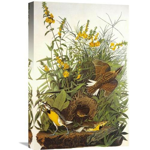 Global Gallery Meadow Lark By John James Audubon, 16 X 24-Inch Wall Art