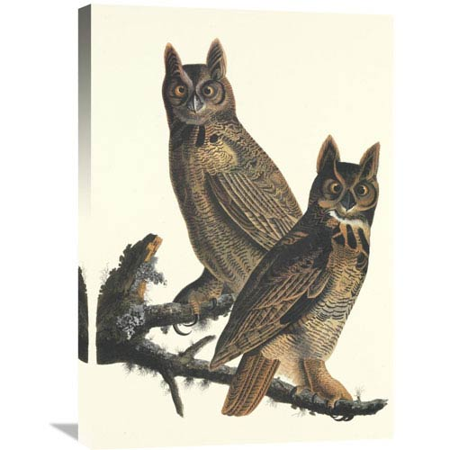 Global Gallery Great Horned Owl By John James Audubon, 21 X 30-Inch Wall Art