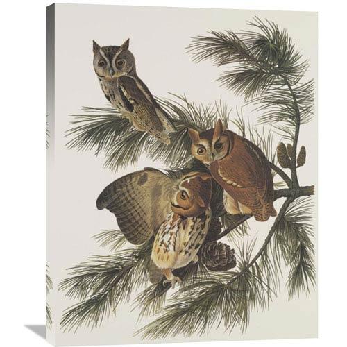 Global Gallery Little Screech Owl Or Mottled Owl By John James Audubon, 28 X 35-Inch Wall Art