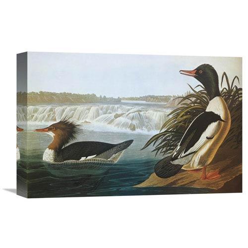 Global Gallery Goosander By John James Audubon, 18 X 12-Inch Wall Art
