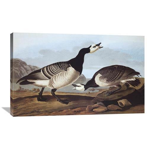 Global Gallery Barnacle Goose By John James Audubon, 40 X 25-Inch Wall Art