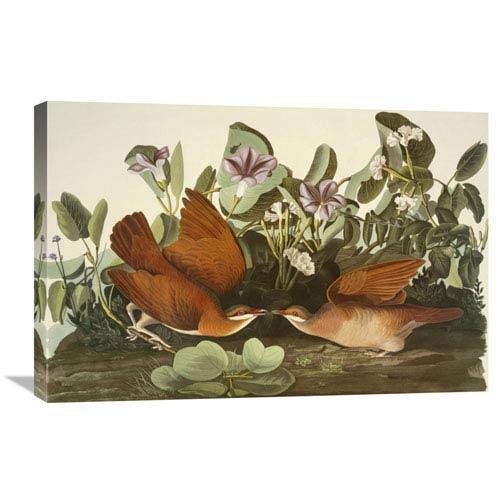 Global Gallery Key West Dove By John James Audubon, 30 X 20-Inch Wall Art