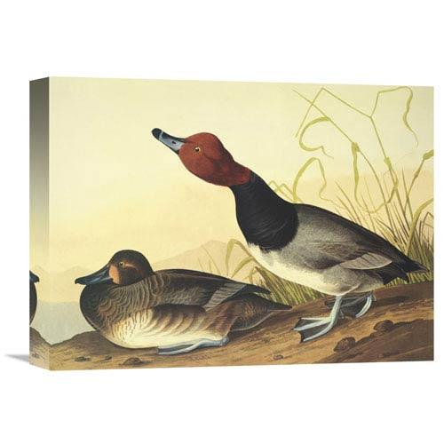 Global Gallery Red Headed Duck By John James Audubon, 16 X 12-Inch Wall Art