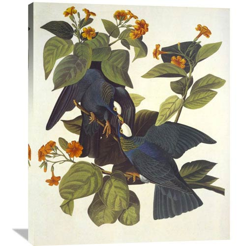 Global Gallery White Crowned Pigeon By John James Audubon, 33 X 40-Inch Wall Art