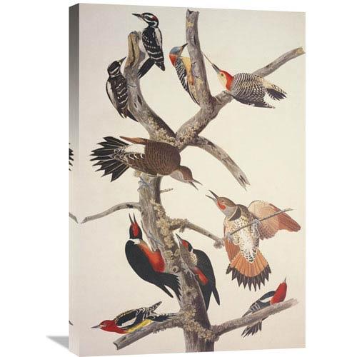 Global Gallery Hairy Woodpecker By John James Audubon, 20 X 30-Inch Wall Art
