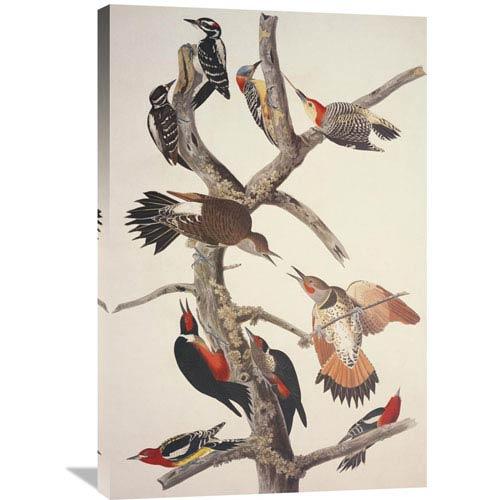 Global Gallery Hairy Woodpecker By John James Audubon, 24 X 36-Inch Wall Art