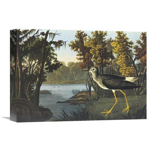 Global Gallery Yellow Shank By John James Audubon, 16 X 11-Inch Wall Art