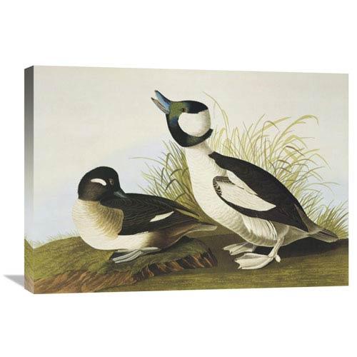 Global Gallery Buffel Headed Duck By John James Audubon, 30 X 21-Inch Wall Art